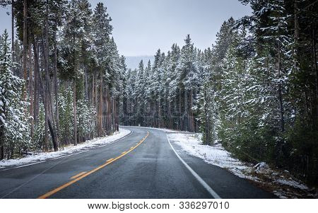 Road Inside Forest Of Yellowstone National Park, Wyoming With Pine Trees Covered By Snow In Early Oc