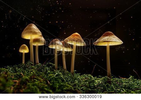 Mushrooms In The Forest Fantasy With The Magical Light Of Fireflies In The Night.