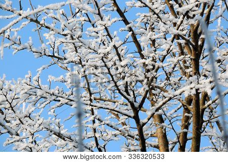 Snowy Winter. Snow. Frost