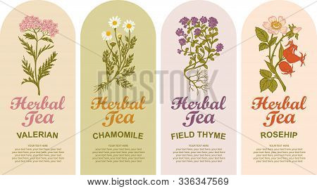 Set Of Vector Labels For Various Herbal Tea. Valerian, Chamomile, Field Thyme, Rosehip. Tea Labels W