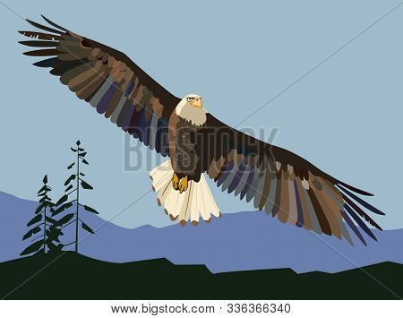 North American Eagle Soars In The Wild. Vector Manual Full Color Graphics