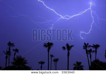 Palms Trees And A Lightning Thunder Storm