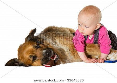9 months old Baby and Dog playing on white bachground poster