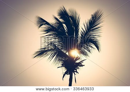 Sunset In Vacation Background. Palm Tree Silhouettes Background. Tropical Tree In Sunset. Vacation B