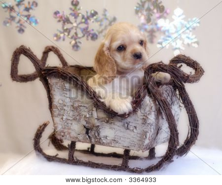 American cocker spaniel puppy sitting in winter sleigh - champion bloodlines poster