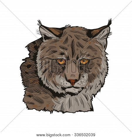 Eurasian Lynx Isolated Vector Illustration. Vector Hand Drawn Wild Animal Sketch Icon. Color Drawing