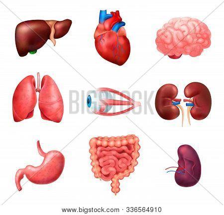 Realistic Human Internal Organs Anatomy Icon Set With Lungs Heart Liver Kidneys Brain Eyes Spleen In
