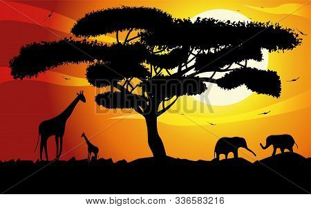 Sunset Or Sunrise In Africa With The Silhouettes Of Trees, Grass, Flying Birds, Elephants, Giraffes,