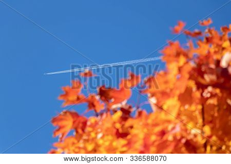 Branches With Red Mapple Leaves In Autumn Colors On A Background Of Blue Sky And A Condensation Trai