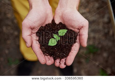 Top View. Mens Hands Holding The Soil With Little Plant In The Middle.