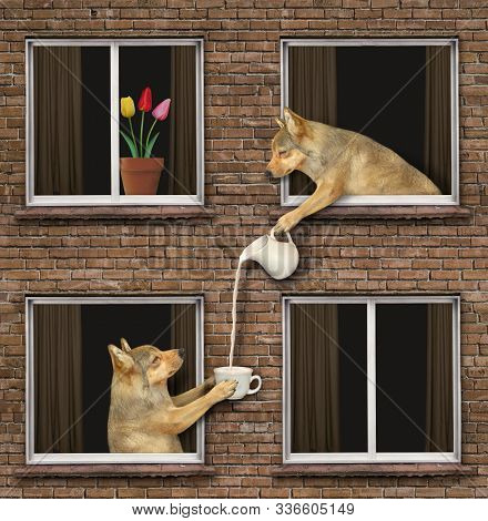 The Beige Dog Is Leaning Out Of The Window And Pouring A Cup Of Milk To Another Dog That Is Its Neig