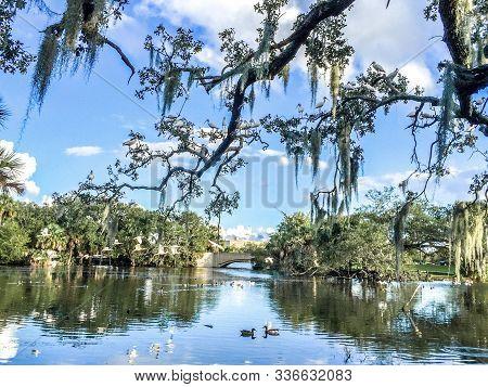 A Swamp Landscape In Louisiana City Park