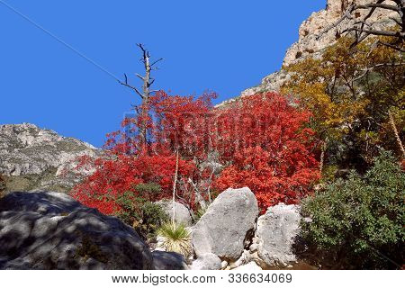 Guadalupe Mountains National Park Located In Texas