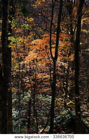 Autumn Scenery Of Oirase Gorge, Japan
