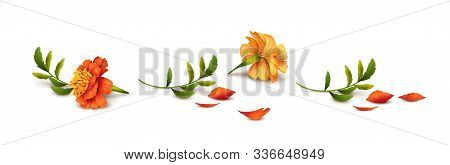Fallen Marigold Flowers Isolated On White Background. Vector Illustration