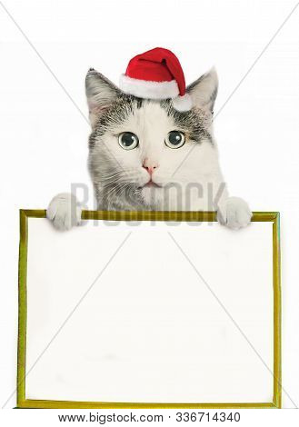 Funny Cat In Santa Hat And Framed Picture With Copy Space Christmas Post Card Photo Isolated On Whit