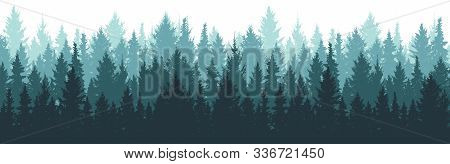 Forest Background, Nature, Landscape. Pine, Spruce, Christmas Tree. Fog Evergreen Coniferous Trees.
