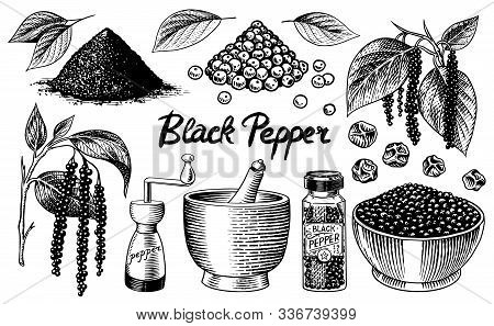 Black Pepper Set In Vintage Style. Mortar And Pestle, Allspice Or Peppercorn, Mill And Dried Seeds,