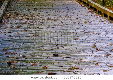 Wet Slick Leaves On A Wooden Walking Trail