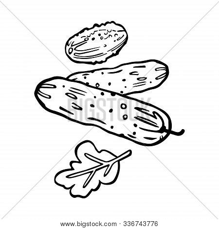 Cucumbers Line Art. Traditional Hand Drawing. Cartoon Style. Black Outline Isolated On White Backgro