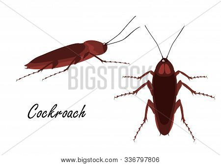 Isolated Object Of Cockroach And Pest Logo. Isolated On A White Background
