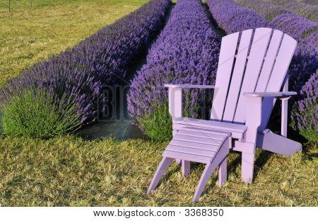 Purple Lawn Chair In Lavender Field