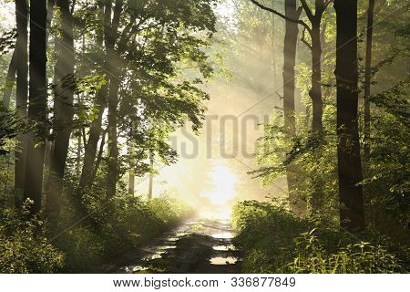 Road trees in spring forest sunrise Nature background Nature landscape Nature background Fresh lush foliage Forest Path in Nature forest Nature Travel hiking Nature outdoors. Nature background Road in sunshine fog mist sun Nature background Trees in woods