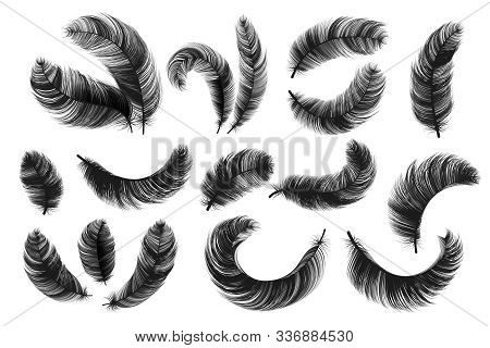 Black Feathers. Realistic Fluffy Swan Feathers, Vintage Isolated Quill Silhouettes, Vector Angel Or