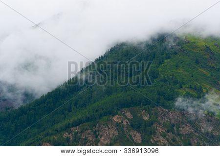 Green Hillside In Fog. Low Clouds In Coniferous Forest