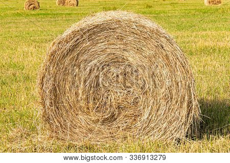 Round Hay Roller On A Sunny Day. Harvesting Of Feed For Agricultural Livestock