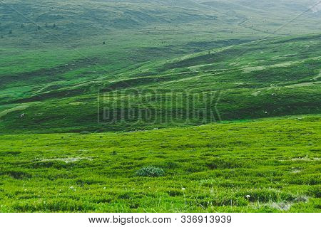 Meadow With Green Grass On Sunny Day. Smooth Hills For Trekking