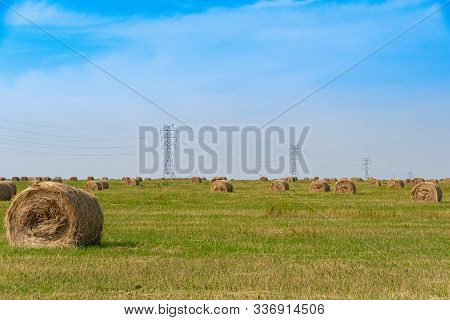 Hay Rolls In Field After Harvesting. Agricultural Pasture On Summer Day. Preparation Of Feed For Cat