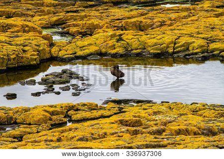 Duck Reflecting In The Water On The Rocks In Farne Islands