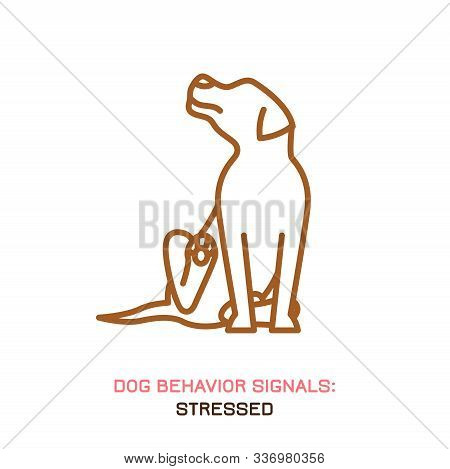 Dog Behavior Icon. Domestic Animal Or Pet Language. Scratching. Stress Release. Doggy Reaction. Simp