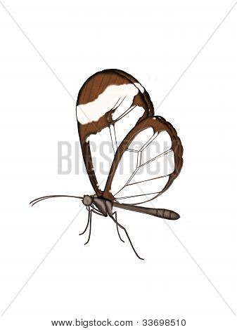 Illustration Of A Glasswing Butterfly.