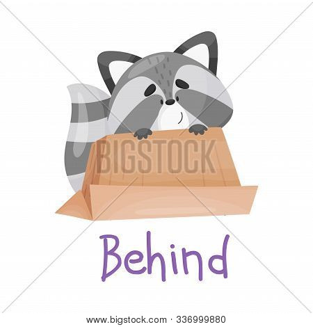 Pretty Little Raccoon Is Behind The Box With Handwritten Inscription Preposition Behind Vector Illus