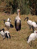Group of birds in Ngorongoro National Park Tanzania poster