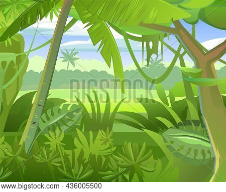 Rainforest Vector. Tropical Forest Panorama. Dense Thickets. View From The Forest. Southern Rural Sc