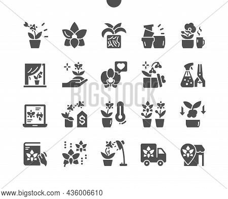 Orchids. Flower, Decoration, Plant, Garden And Blossom. Transplant A Flower. Favorite Orchid. Vector