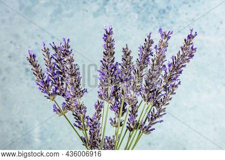 Lavender Flower Bouquet On A Blue Background, A Bunch Of Lavandula Plants