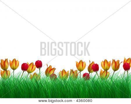 Three Flower Border