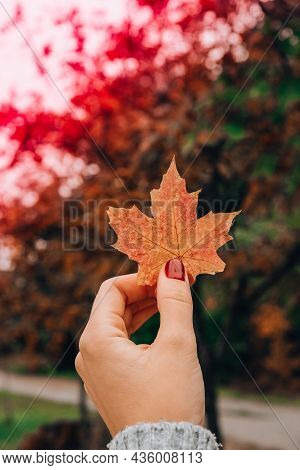 Stylish Red Female Nails. Fall Leaf In Hands. Modern Beautiful Manicure. Autumn Winter Nail Design C
