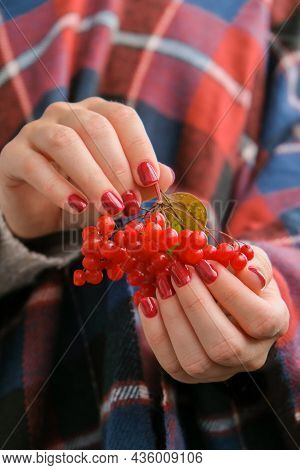 Stylish Red Female Nails. Hands Holding Red Currants. Modern Beautiful Manicure. Autumn Winter Nail