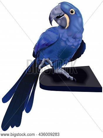 Blue Hyacinth Macaw Parrot (anodorhynchus Hyacinthinus) - Colored Illustration Isolated On White Bac