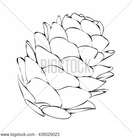 Vector Illustration Of A Fir Cone. Silhouette Of A Pine Cone. Christmas Element For Composition. Pin
