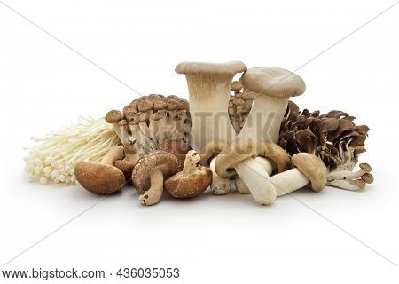 Japanese popular mushrooms collection isolated on white background