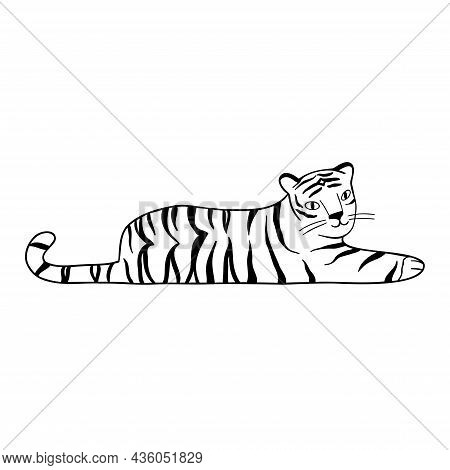 Doodle Tiger Lies, Hand-drawn. Cute Chinese Tiger Drawn With Black Lines. Vector Illustration Isolat