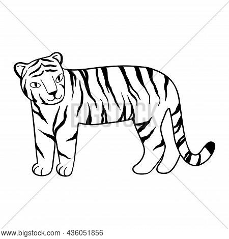 Doodle Tiger Stands, Hand-drawn. Cute Chinese Tiger Drawn With Black Lines. Vector Illustration Isol