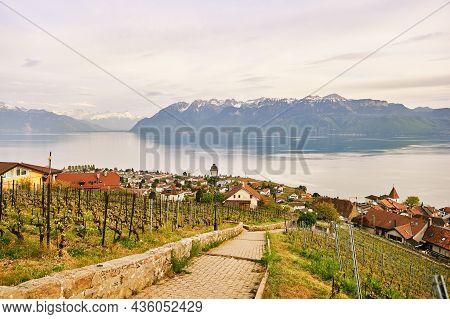 Vineyard Terraces At Lake Geneva In Spring, Lavaux, Vaud, Switzerland
