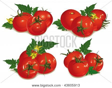 Set Of Red Tomatoes
